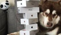 el-hijo-del-hombre-ms-rico-del-china-le-regala-8-iphones-7-a-su-perro