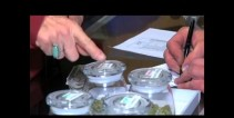 greenfield-y-los-dispensarios-de-marihuana.jpg