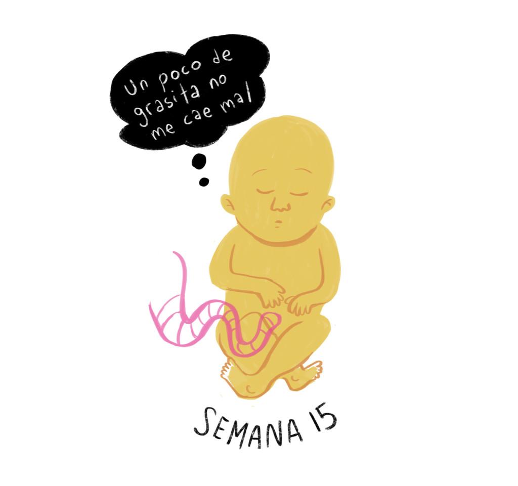 15 semanas de embarazo ¿cómo es el universo de mi pequeño?