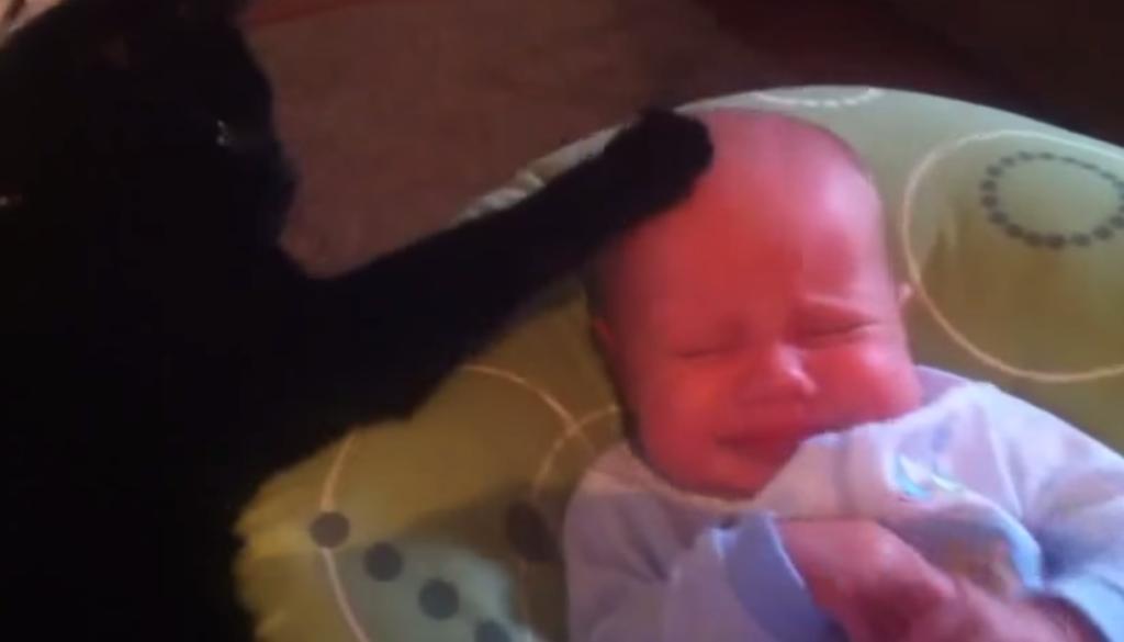 VIDEO: Gato logra dormir a bebé inquieto