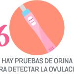 ovular6