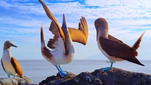 Galápagos 3D. Las maravillas de la naturaleza