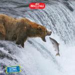 Parques Nacionales. La aventura en América Salvaje 3D