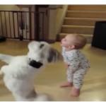 VIDEO: Tierno bebé imitando truco de su mascota