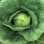 La poderosa razón para usar hojas de col durante la lactancia