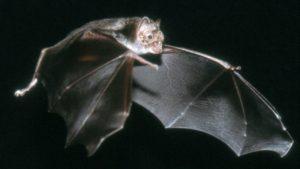 Muertes recientes confirman el riesgo latente de la rabia