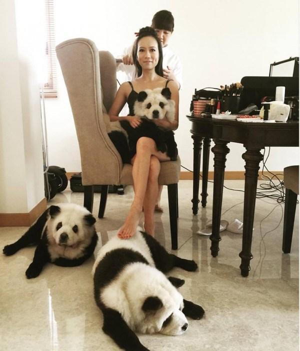 perros pandas4