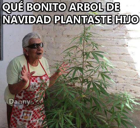 marihuana7